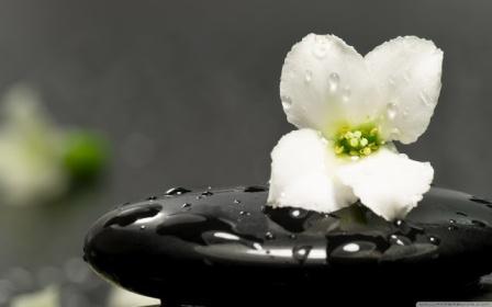 http://3.bp.blogspot.com/-ftyGHEYwMQ0/UVrRGjbsFZI/AAAAAAAAAnw/QYpw2v2HqLc/s640/zen_stones_and_flower-wallpaper+(1).jpg
